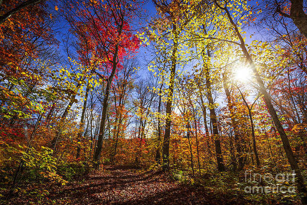 Photograph - Morning In Autumn Forest by Elena Elisseeva