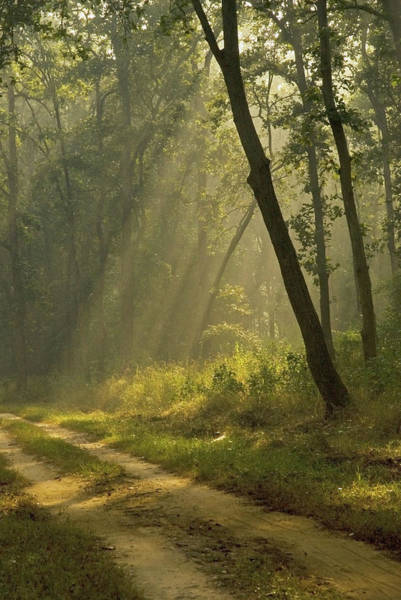 Ie Wall Art - Photograph - Morning Light Beams Through The Trees by Jan and Stoney Edwards