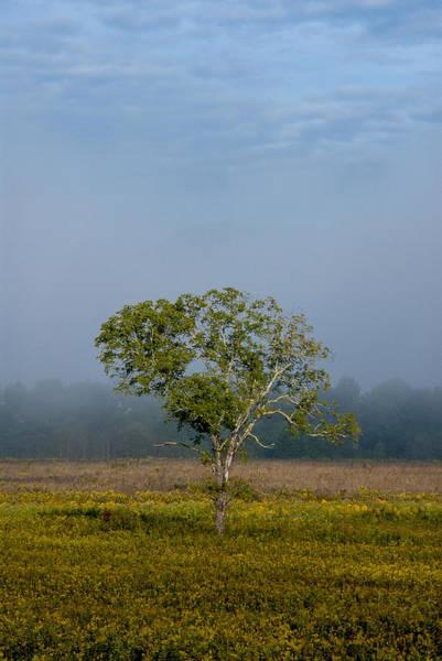 Photograph - Morning Light by Carol Erikson