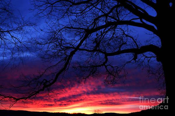 Photograph - Morning Light Oak Tree by Thomas R Fletcher