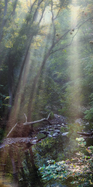 Beam Of Light Photograph - Morning Light by Tom Mc Nemar