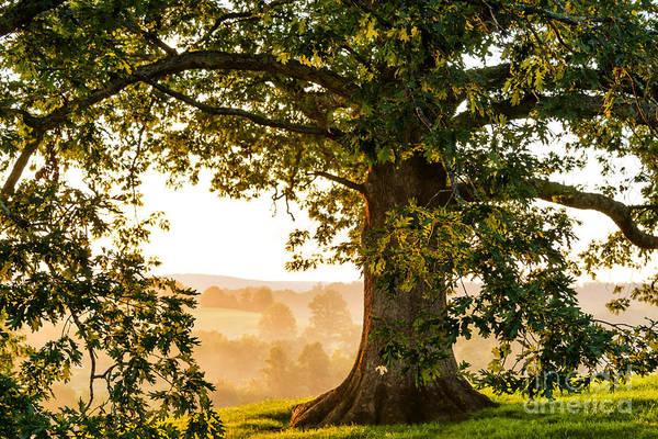 Photograph - Morning Light Under Oak Tree by Thomas R Fletcher