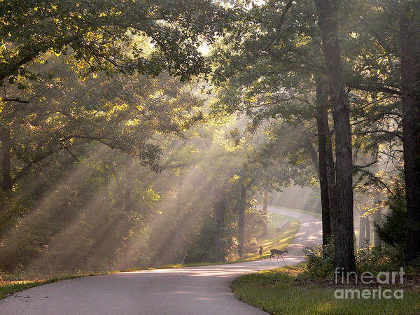 Wall Art - Photograph - Morning Light With Fawn And Doe by David Bearden