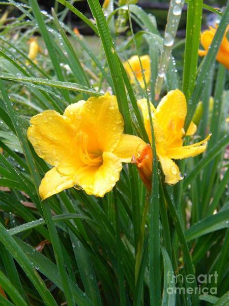Photograph - Morning Dew by Matthew Seufer