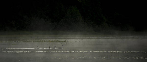 Duck Hunt Photograph - Morning Mist by Aaron Bedell