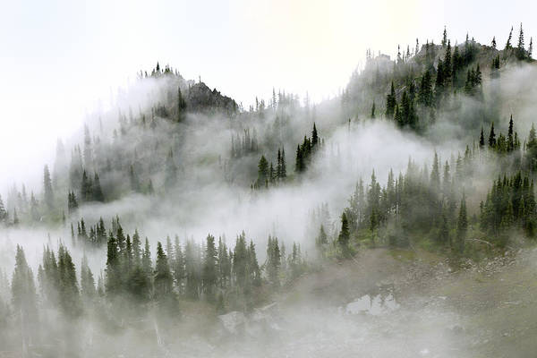Trees In Fog Photograph - Morning Mist In Olympic National Park by King Wu