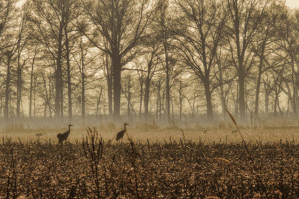 Photograph - Morning Mist by Jack R Perry