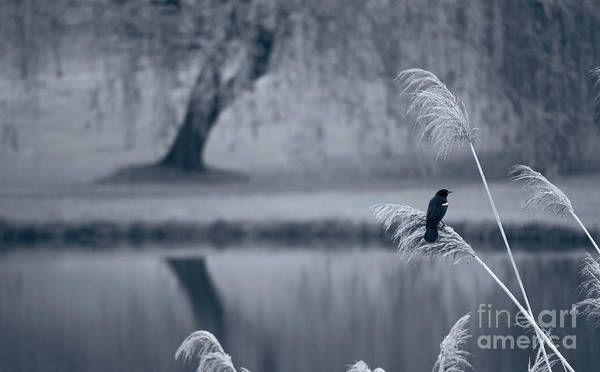 Photograph - Morning Mood II by Rima Biswas