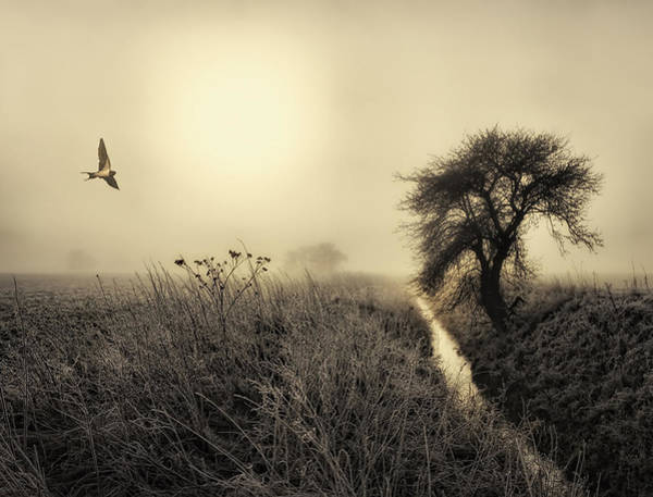Flying Bird Photograph - Morning Mood by Kent Mathiesen