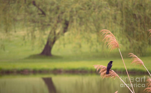Photograph - Morning Mood by Rima Biswas