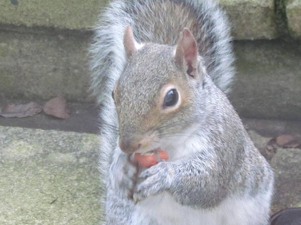 Little Things Photograph - Morning Nut Time by Joyce Woodhouse