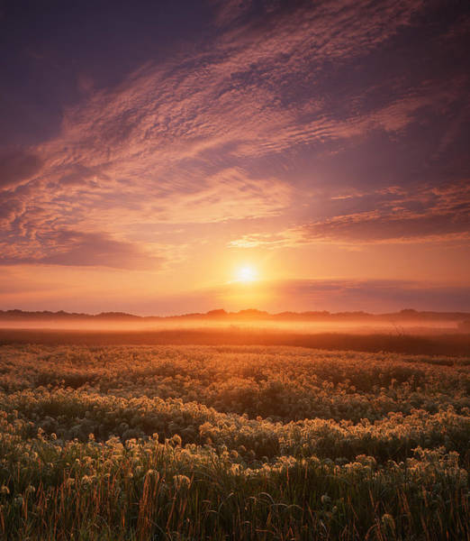 Morning On The Fen Art Print