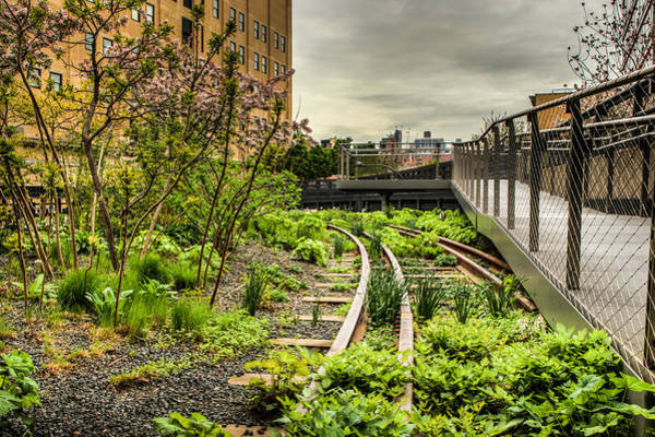 Photograph - Morning On The High Line by Dave Hahn