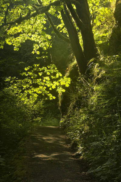 Back Light Photograph - Morning Path by Andrew Soundarajan