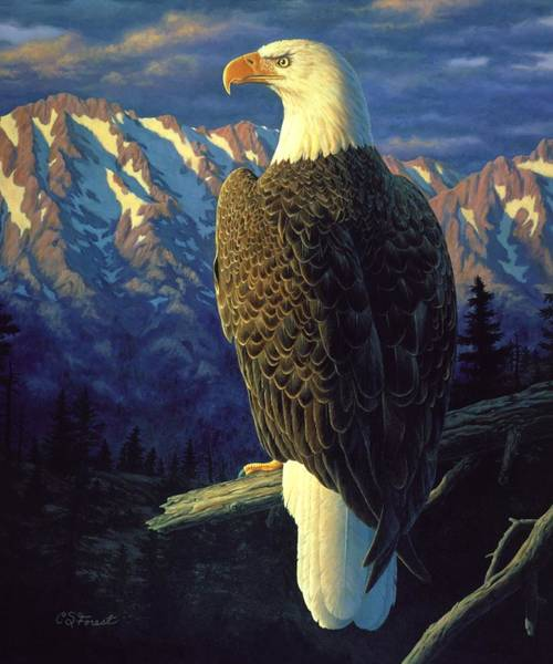 Eagle Feather Wall Art - Painting - Morning Quest by Crista Forest
