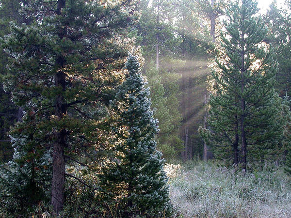 Photograph - Morning Rays by Shane Bechler