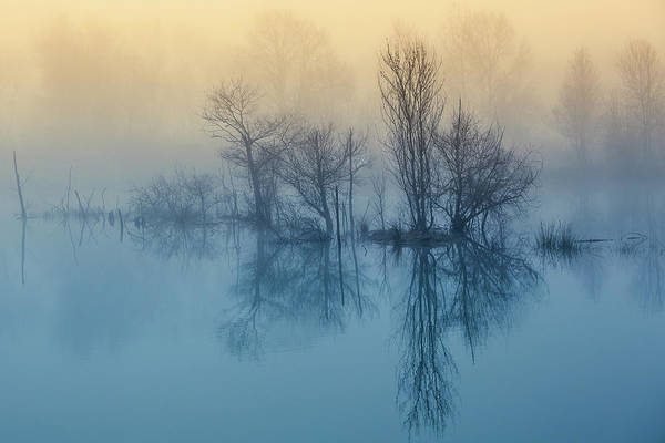 Turquoise Photograph - Morning Reflection by David Butali