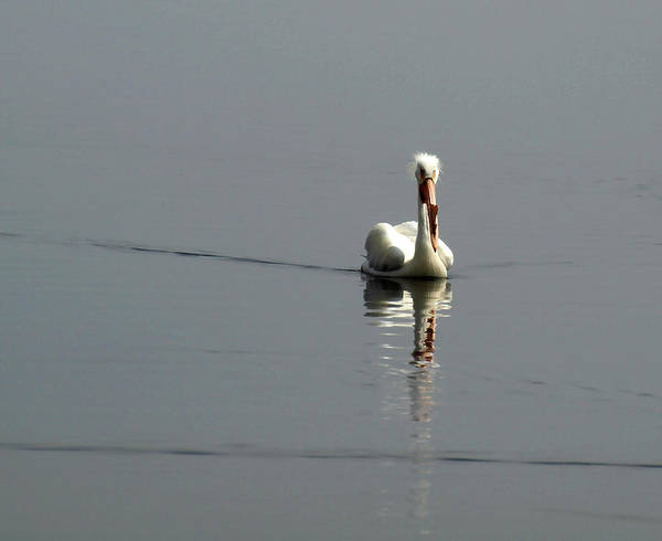 Photograph - Morning Reflection by Thomas Young