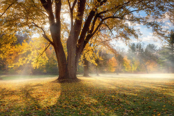 Photograph - Morning Shadows by Bill Wakeley