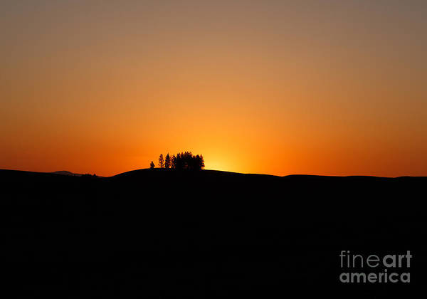 Photograph - Morning Silhouette by Beve Brown-Clark Photography