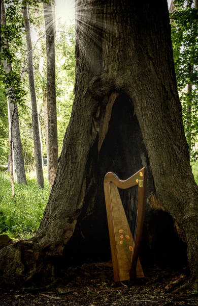 Morning Song Wall Art - Photograph - Morning Song by Pat Eisenberger