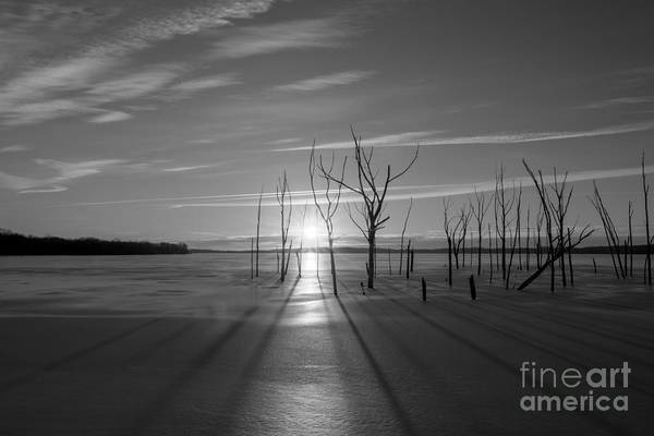 D800 Photograph - Morning Stretch Bw by Michael Ver Sprill