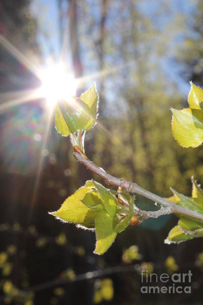 Photograph - Morning Sun by Kate Avery
