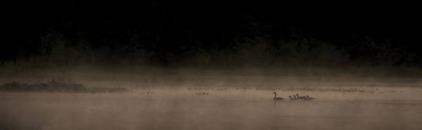 Duck Hunt Photograph - Morning Swim Sepia by Aaron Bedell