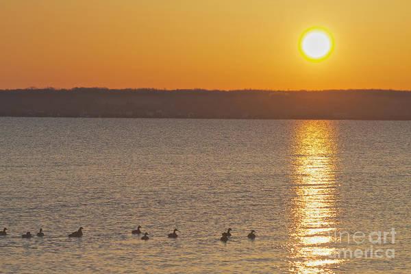 Photograph - Morning Swim by William Norton