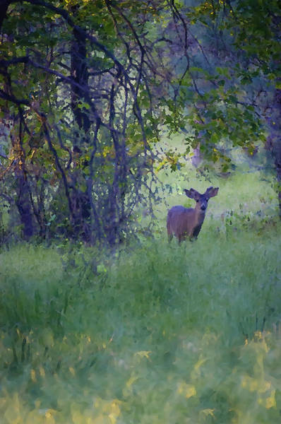 Photograph - Morning Visitor by Sherri Meyer