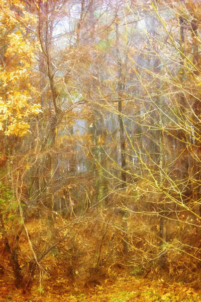 Photograph - Landscape - Morning Walk In The Woods - 2 by Barry Jones