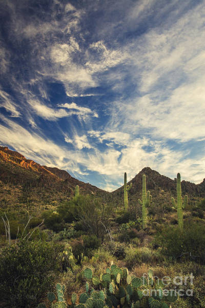 Sonoran Desert Photograph - Morning's First Light by Medicine Tree Studios