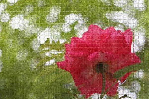 Wall Art - Photograph - Mosaic Rose by Dan Sproul