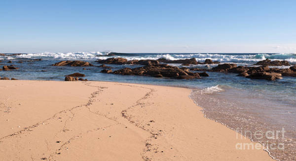Photograph - Moses Rock Beach 02 by Rick Piper Photography