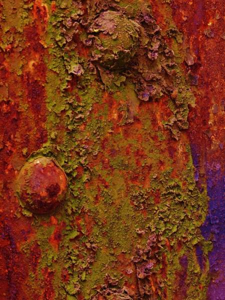 Photograph - Moss And Rust by Charles Lucas