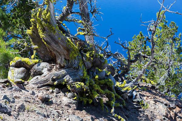 Crater Lake Np Photograph - Moss And Tree Stump by Dan Hartford