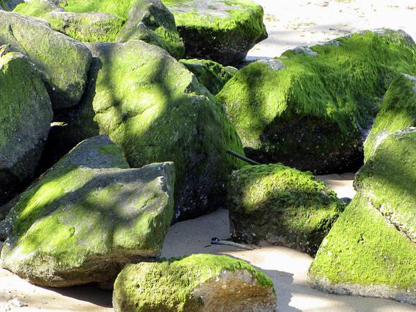 Photograph - Moss On The Rocks by Bob Slitzan