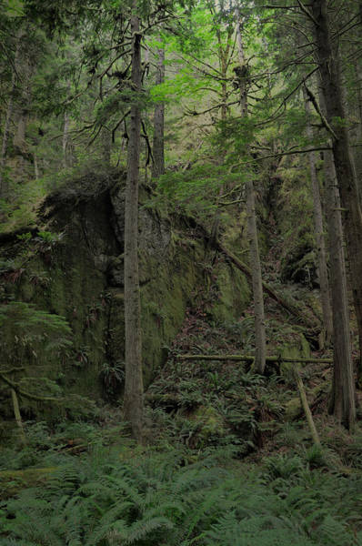 Photograph - Moss Covered Outcropping by Kirt Tisdale
