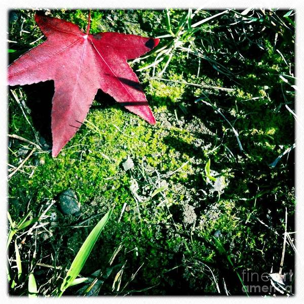 Photograph - Moss by Denise Railey