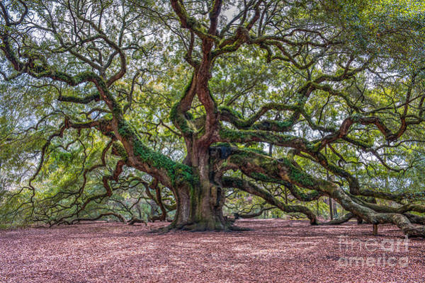 Photograph - Moss Draped Limbs by Dale Powell