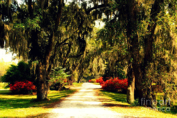 Photograph - Moss On The Trees At Monks Corner In Charleston by Susanne Van Hulst