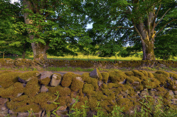 Photograph - Moss On Two Walls by Matt Swinden