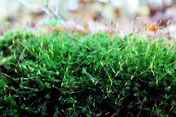 Photograph - Moss by Rebecca Frank
