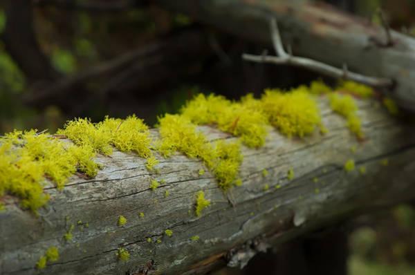 Photograph - Moss by Sebastian Musial