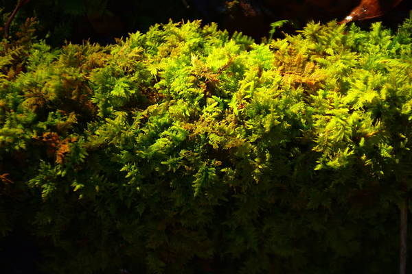 Photograph - Mossy by Lisa Wooten