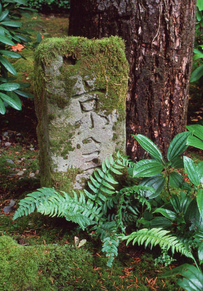 Mossy Photograph - Mossy Milestone by Tony Craddock/science Photo Library