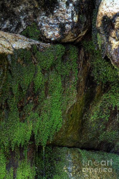 Photograph - Mossy Moss by Rick Kuperberg Sr