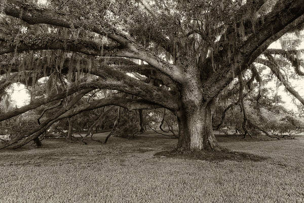 Rowena Photograph - Mossy Oak by Silvio Ligutti