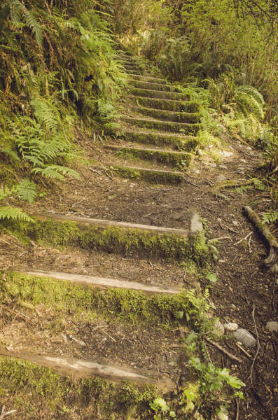 Photograph - Mossy Path by Heather Applegate