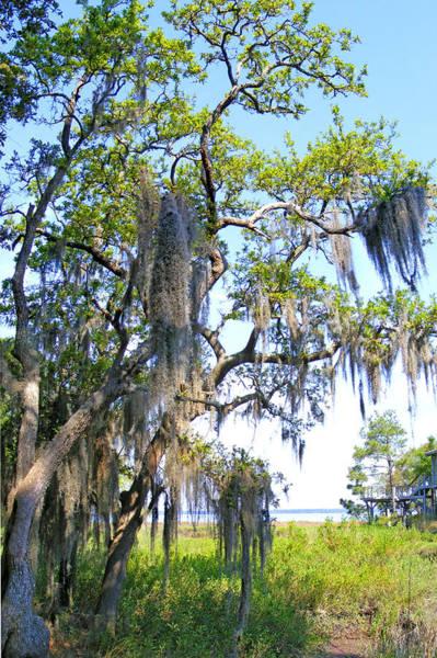 Photograph - Mossy Savannah by Duane McCullough